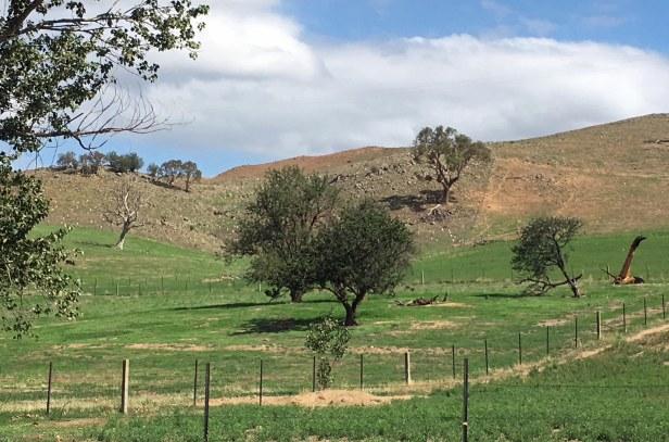 orchard and cockatoo 2 feb 2020
