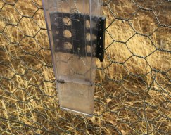 rain gauge with beetles